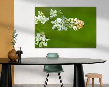 Oranjetipje op wit bloemetje von Fokko Erhart