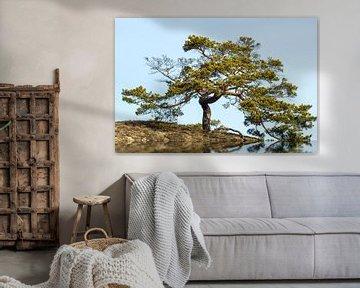 Trees with radiating power van Frank Grässel