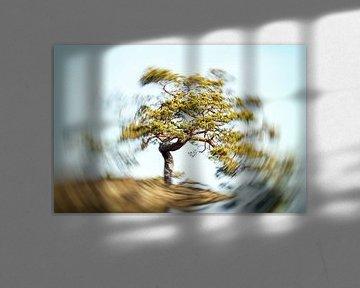 Baum mit Strahlungskraft im Wirbel von Frank Grässel