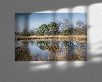 Spiegeling in de natuur van Mark Bolijn