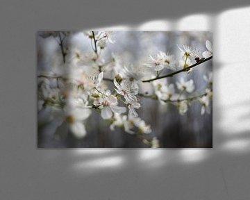 Frühling - Blüte von Rossum-Fotografie