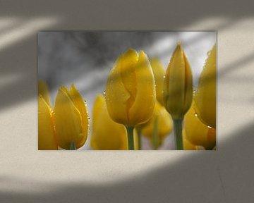 Tulpen met regendruppels von Miepsan Fotografie