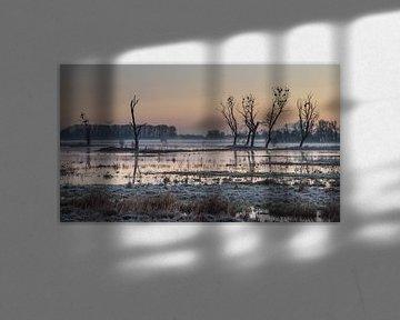 sunrise at Bourgoyen park