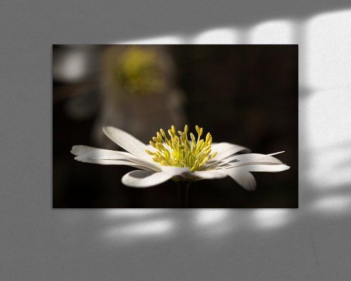 Impression: Anemoon, Witte anemoon sur Leo Langen