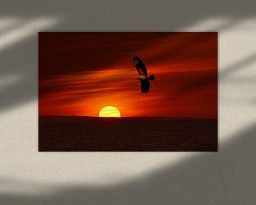 Buizerd bij zonsondergang, Buzzard at sunset