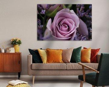 Rose in Flieder von Simone Marsig