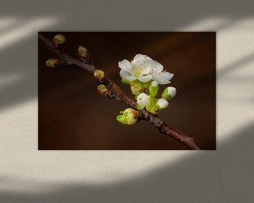 Tak perenbloesem von Maren Oude Essink