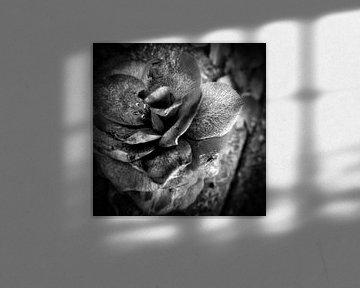 flor von Ann Beckers