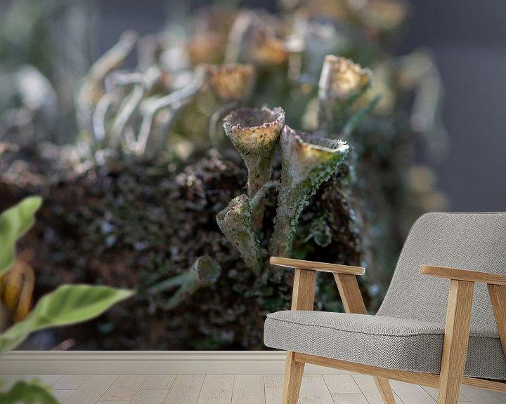 Sfeerimpressie behang: Bekermos van Ingrid Aanen