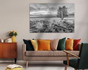 Zwart wit Ginkelse Heide van Sander Grefte