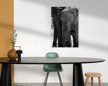 Zwart wit olifanten van Ellinor Creation