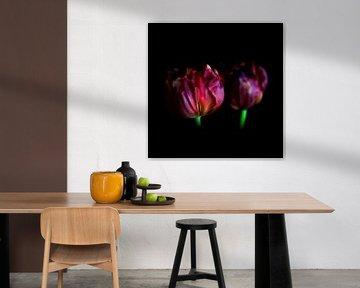 Het stalken van een tulp - een familieportret, laatste fase van Peter Baak