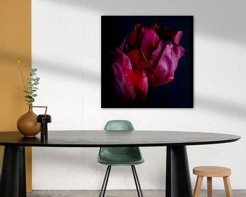 Het stalken van een tulp - een familieportret, wie zei dat verouderen lelijk is van Peter Baak