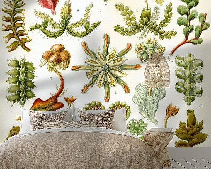 Sfeerimpressie behang: Botanische prent van Ernst Haeckel van Studio POPPY