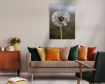 Paardebloem pluis, Dandelion (gezien bij vtwonen) van Marion Moerland