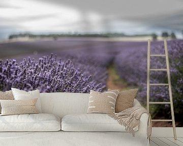 Lavendelvelden van Anne Loman