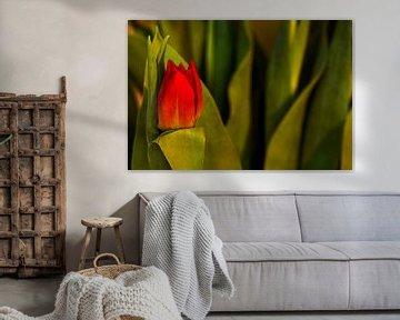 Concept Mother´s Day : Red tulip von Michael Nägele