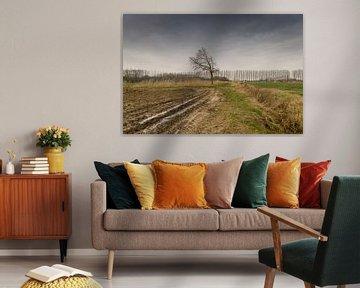 winters landschap van Lieke van Grinsven van Aarle