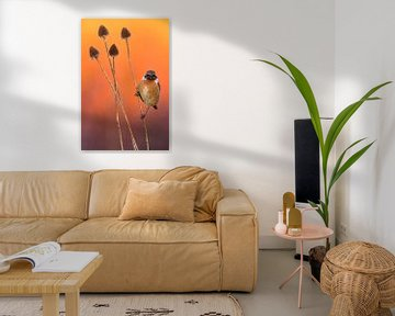 Roodborsttapuit (Saxicola rubicola) van AGAMI Photo Agency