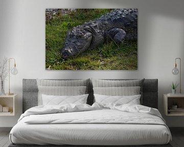 Krokodil van heel dichtbij von Joost van Riel