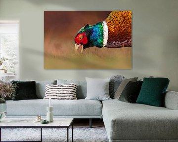 Mannetje Fazant (Phasianus colchicus) van AGAMI Photo Agency