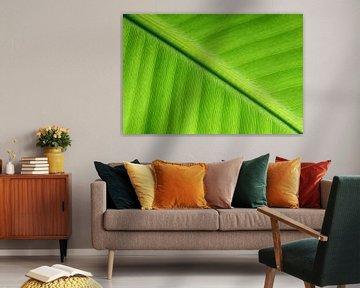 Leaf von Human- pictures