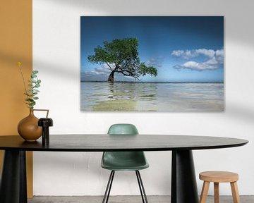 Onondekte 'Wanaka Tree' in de Filipijnen van Jesper Boot