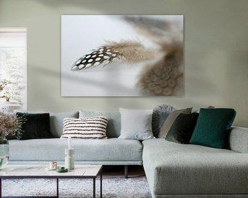 Kievitsveertje op witte achtergrond