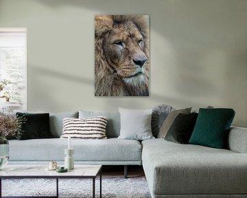 Le lion sur Anjo ten Kate