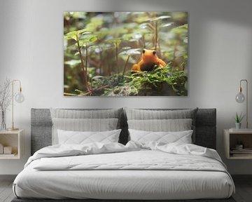 Orange Frosch. von Anjo ten Kate