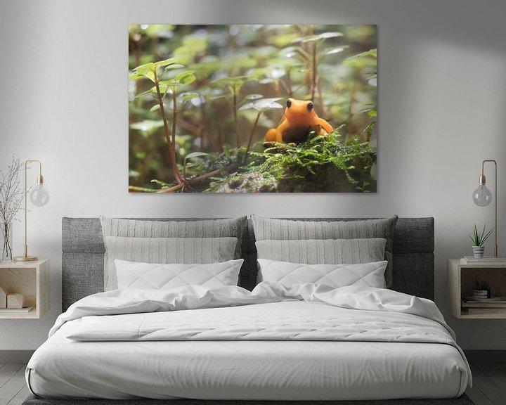 Beispiel: Orange Frosch. von Anjo ten Kate