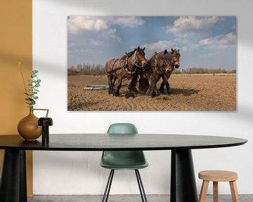 Trekpaarden voorjaarswerkzaamheden sur Bram van Broekhoven
