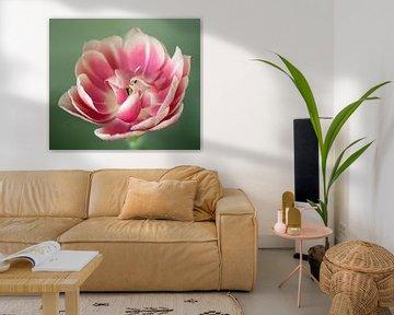 Roze tulp von Anne Hana
