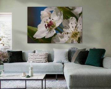 Pytusblüte von Erik Reijnders