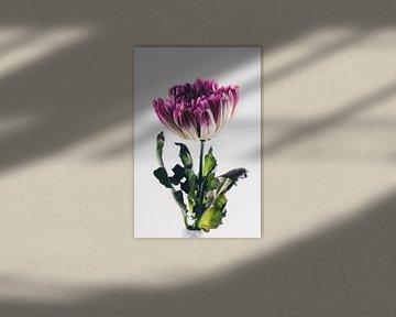 Stolze Blume von Lavieren Photography