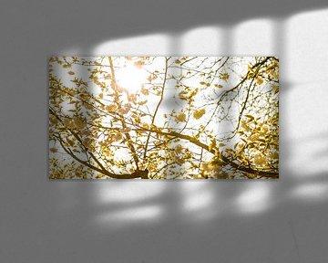 Sfeervol lente van Photography by Karim