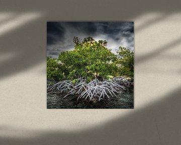 Mangrove Curacao van Keesnan Dogger Fotografie