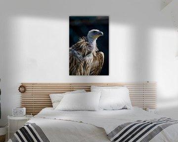 Roofvogel van Photography by Karim