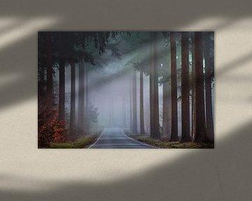 The road ahead van Roelie Steinmann