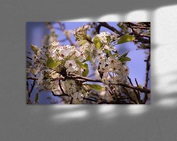 Witte lentebloesem von Deborah S