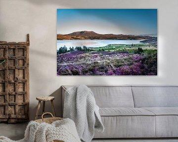 Schotse Heide