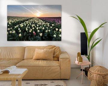 Sonnenaufgangstulpenfelder. von Peter Haastrecht, van