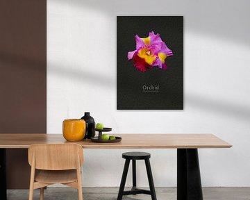 Orchidee von Leopold Brix