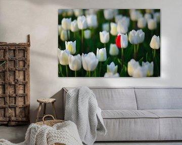 Tulpenseizoen in Nederland van Henk Meijer Photography