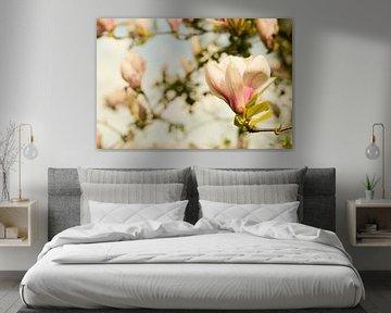 Magnolie Frühlingsblüten 1 von Joske Kempink