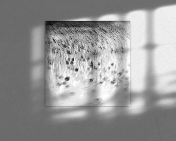 field of shadows