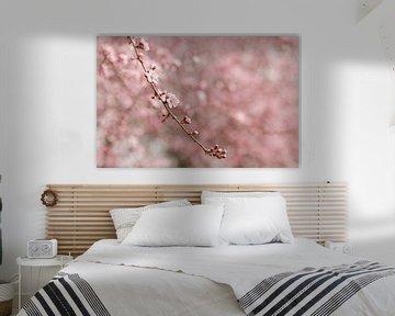 Zweig mit rosa Kirschblüte von Mayra Pama-Luiten