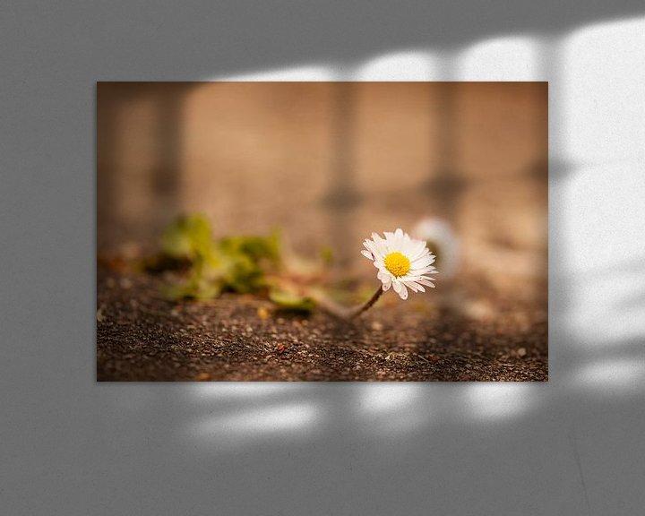 Beispiel: Gänseblume von Alena Holtz