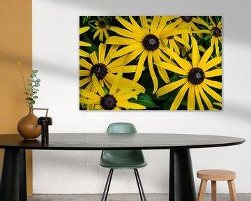 Meerdere gele bloemen von Photography by Karim