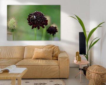 bij op paarse plant von Photography by Karim